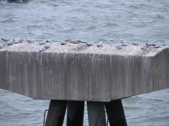 Lake Erie Concrete Thingy With Birds